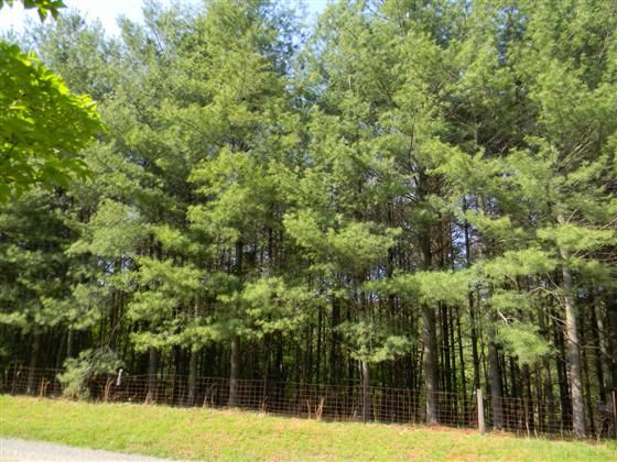 Lot 1 Allen Farm Ln TM 18-10A1 2.12 acres perced for a 3 bedroom house in 2008. In the desirable White Hall Magisterial District and Buck Mountain Creek watershed area Picture your dream home to be built here  Call for plats and soil study.   Beautiful land and surroundings Earlysville is an unincorporated community 9 miles N of city of Charlottesville. Named after John Early who in 1822 bought just under 1000 acres Earlysville was the original location of Michie Tavern before its 1927 ...