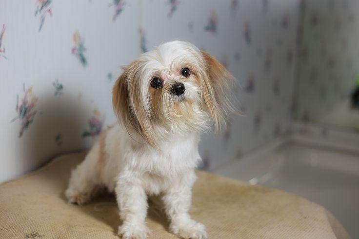 25 Best Ideas About Killing Fleas On Pinterest Dog Flea