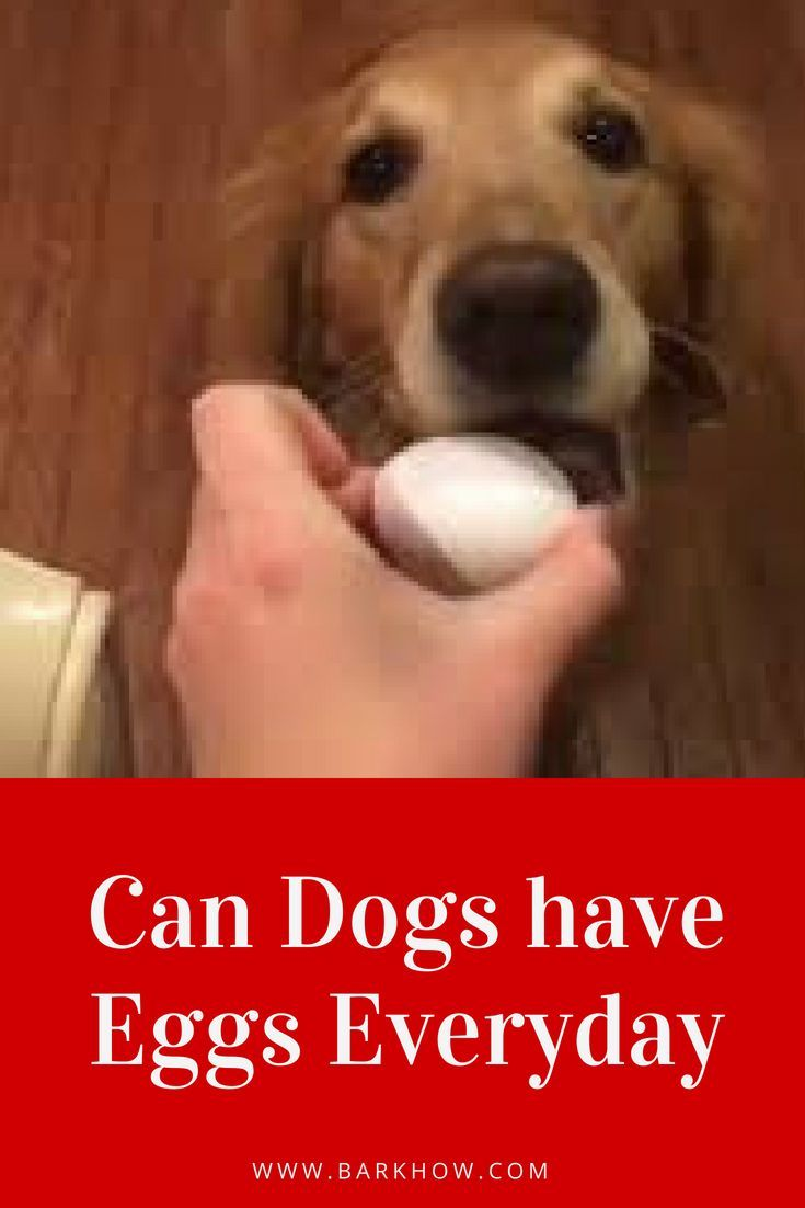 Can I Feed My Dog Eggs Every Day Can Dogs Eat Eggs Eggs For Dogs Dogs