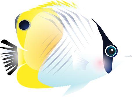 Fisk, Tropiske Fisk, Hav