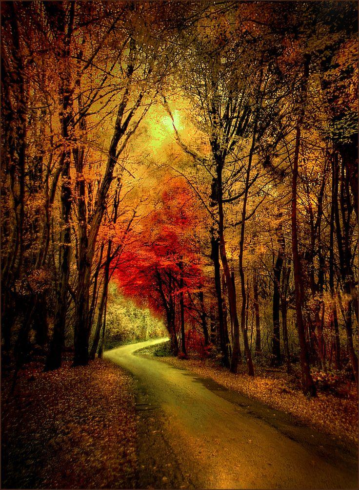 Forest road (Slovenia) by Darko Geršak