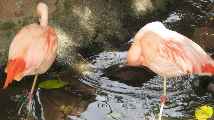 Pins em salmão mais bonito. Zoológico de Pomerode, SC/Brasil.