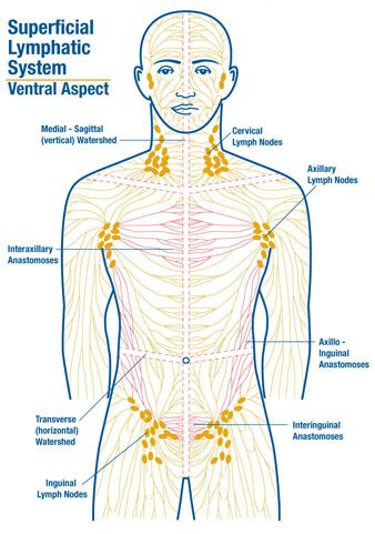 Difference In Lymphatic Function In Health And Disease State Case Study Solution & Analysis
