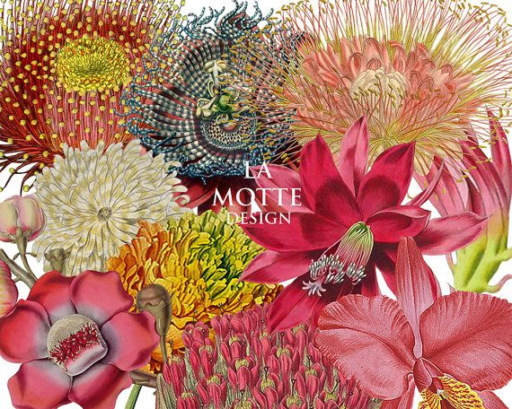 flower clipart exotic flower clipart of beautiful by Lamottedesign, kr22.00