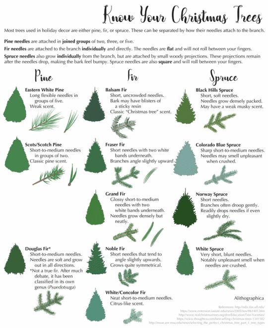 10 Tips To Start A Christmas Tree Farm To Make Money Pt Money In 2020 Christmas Tree Farm Tree Farms Christmas Tree