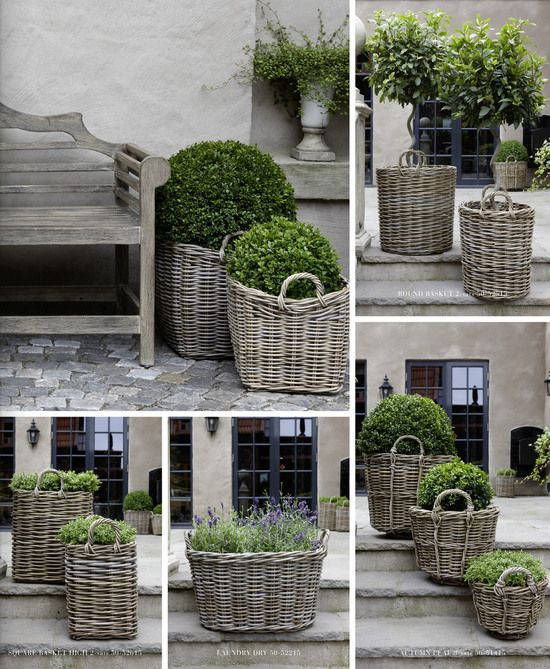Plants in gray rattan, boxwoods, lavender, etc
