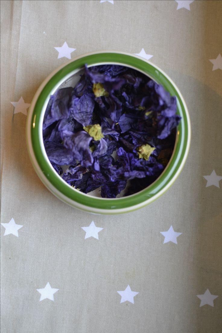 Dried flowers for chinchillas. Suszone kwiaty dla szynszyli. #szynszyle #szynszyla