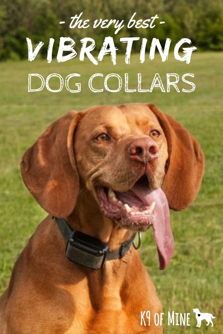 E Collar Training Tips For Dogs Electric Collars Remote Collar