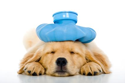 Must-haves for a pet first aid kit