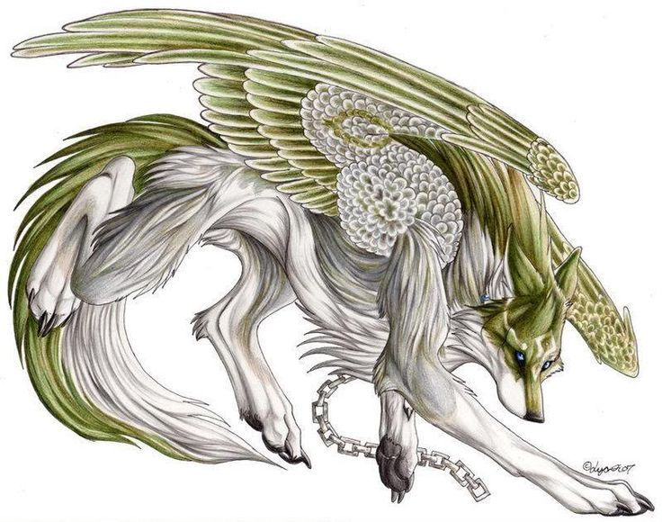 anime angel wolf | View topic - ||The Secret War|| (Angel vs. Demon rp) *Accepting ...