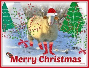Merry Christmas from the wool stop.