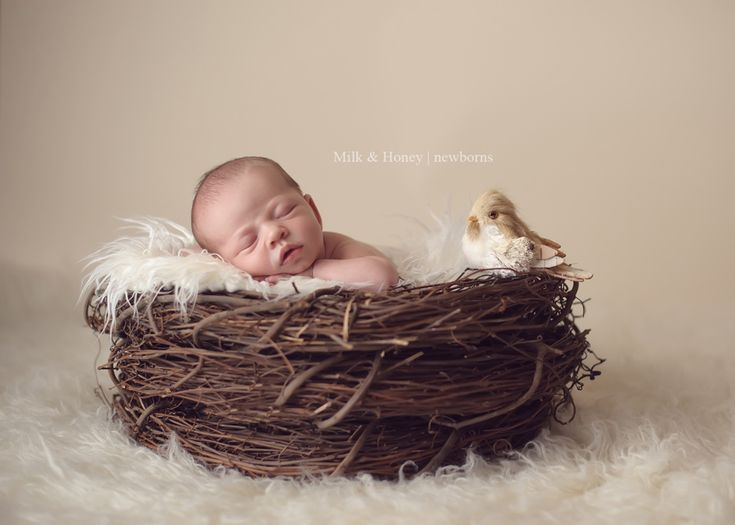 Newborn baby nest i love it with the little birdie