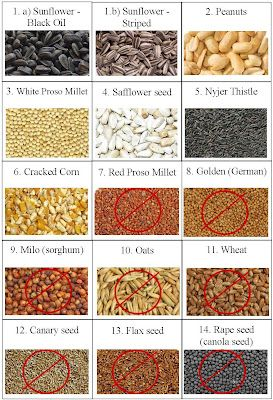 Wild Birds Unlimited: Seeds that birds want and don't want