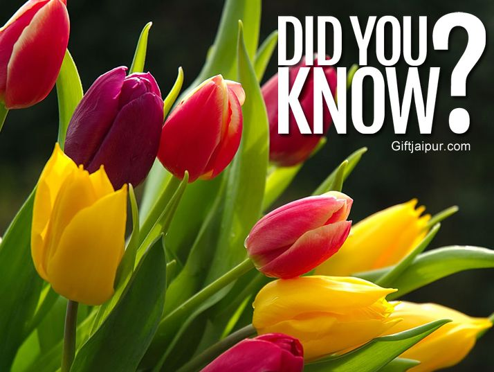 Several centuries ago in Holland, tulips were more valuable than gold.