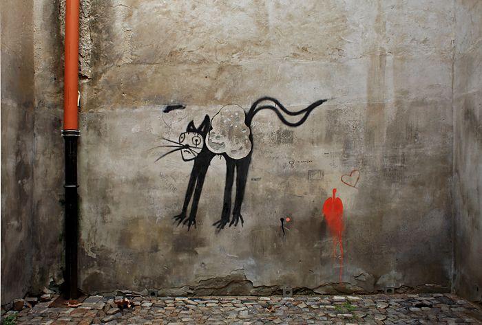 Nedělní kočka
