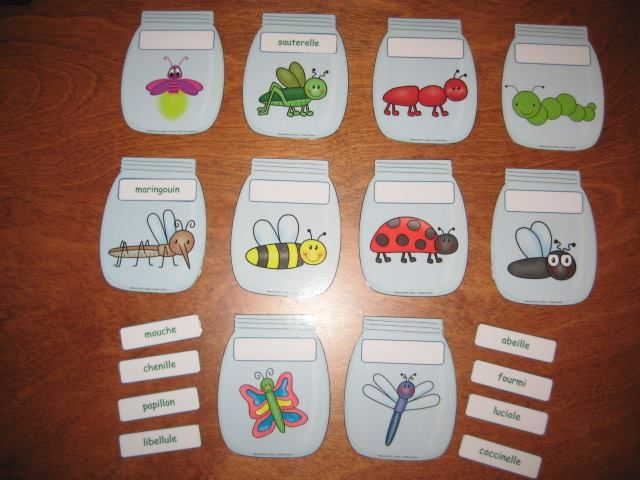Atelier d'identification d'insectes Vu sur facebook - Préscolaire: les…