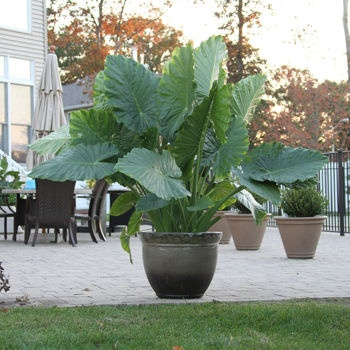 Costco Inviting Borders Potted Plants Outdoor Pool 400 x 300