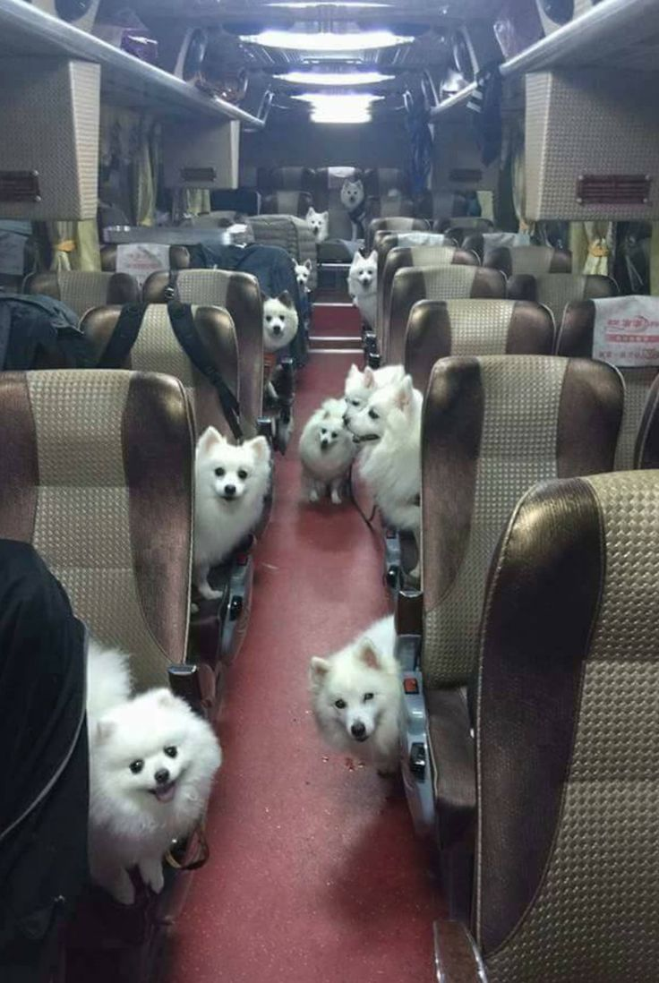 I've found the bus to heaven                                                                                                                                                                                 More