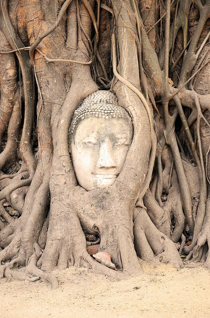 Stone Buddha head embedded in a tangle of tree roots in the ancient Siamese city of Ayutthaya, a UNESCO World Heritage Site