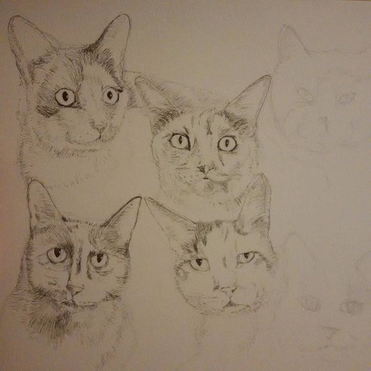 Working on a #commission #drawing for @kittiesblue 8 #cats #portrait #pen #catlover #catstagram #twitter #wip