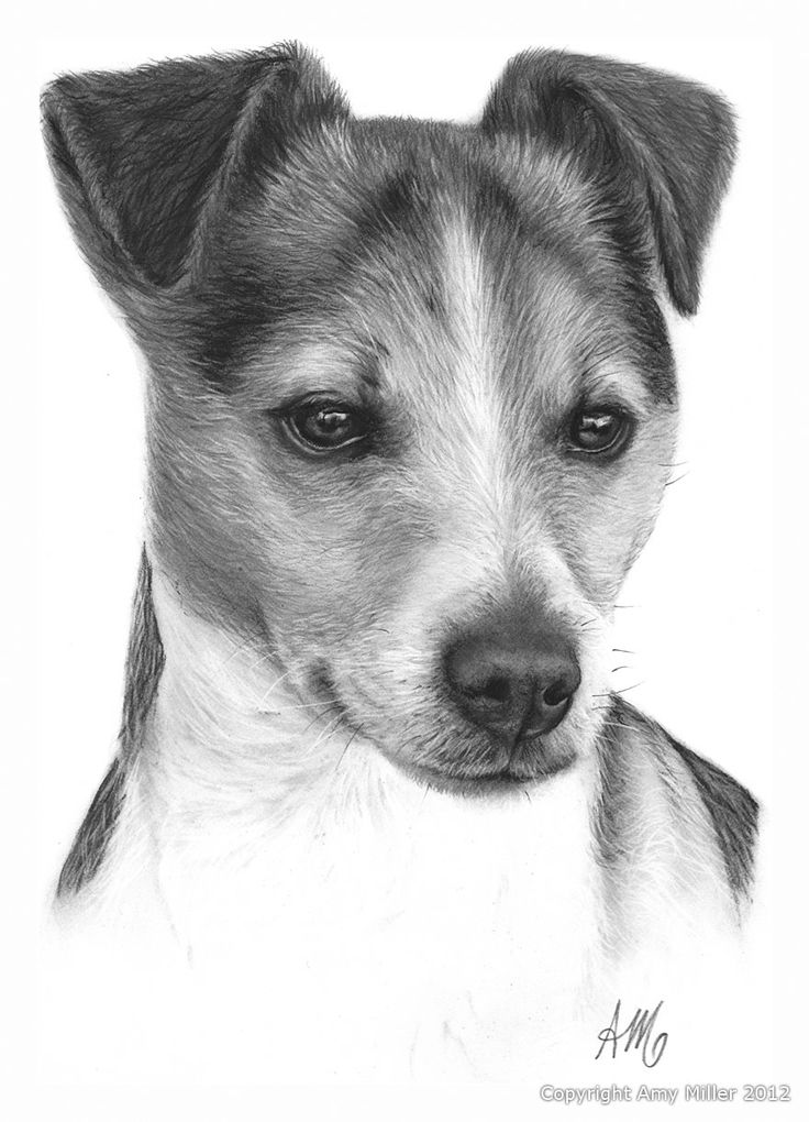 44 best jack russell images on Pinterest   Jack russells