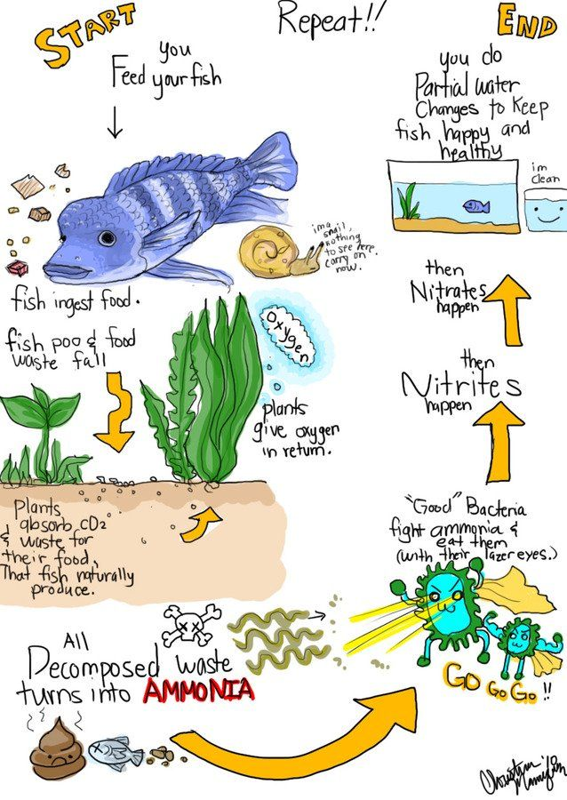 The Nitrogen Cycle For Everyone Aquariums Pinterest