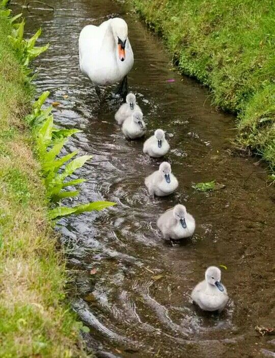 I love this! A family outing. :-)