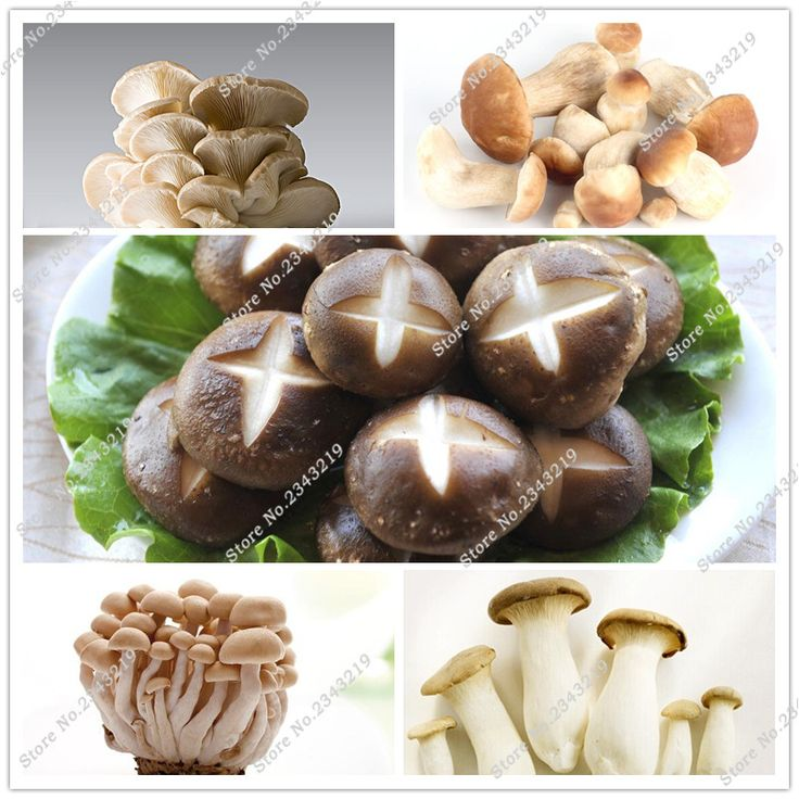 50pcs/bag Mushroom Seeds Funny Succlent Plant Edible Health Vegetable 24 Kinds Mushroom Seeds For Happy Farm Free Shipping #Affiliate