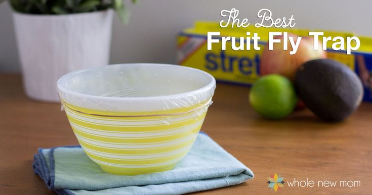 die besten 25 beste fruchtfliegenfalle ideen auf pinterest frucht fliegt hausfliegen t ten. Black Bedroom Furniture Sets. Home Design Ideas