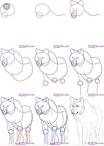 how to draw a red wolf step by step