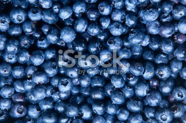 Freshly collected blueberries Фотография роялти-фри