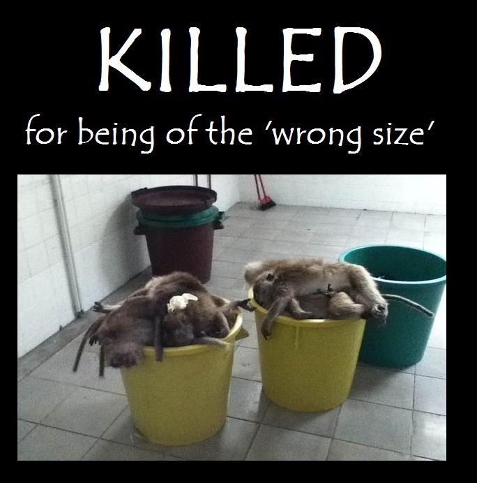 testing on animals wrong or right essay So this is why i feel it is right to experiment on animals by: is animal testing ethically right sign up to view the whole essay and download the pdf for.