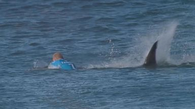 Browse Shark Attack latest news and updates, watch videos and view all photos and more. Join the discussion and find more about Shark Attack at abcnews.com