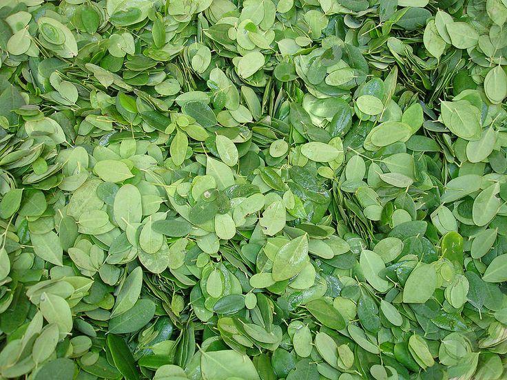 10 Healthy Reasons You Should Be Eating Moringa Leaves