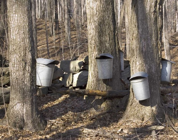 Maple Pails. TITLE: Syrup Pails LOCATION: Putney Vermont MEDIUM: Fine art print (unframed) PRINT SIZES: 5X7 8x10, 11x14, 13X19 THE SIZE OF THE PRINT OFFERED HERE IS 5X7 DETAILS: You are purchasing a limited edition fine art print that is unmatted and unframed. Each print is an original image reproduced on professional acid free museum quality paper using archival inks. Each print is signed and numbered on the back. Prints are shipped rolled in photo mailer tubes and should be carefully...