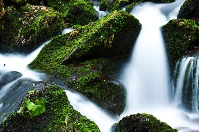 Creek flowing over green forest landscape - the contrast of green and white, stillness and flow.
