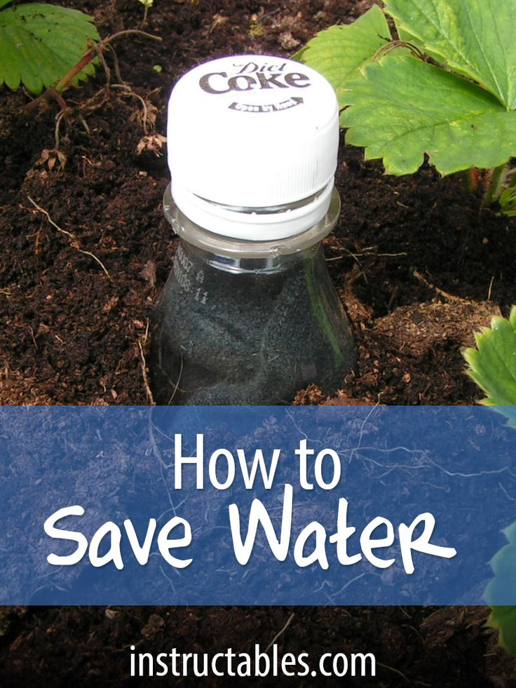 Save water in your vegetable garden, especially plants growing in pots and troughs, which dry out more quickly.