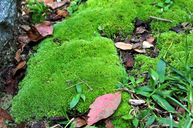 25 Best Ideas About Moss Paint On Pinterest Growing