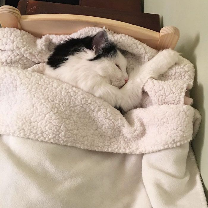 Cat Rescued From Terrible Conditions Now Sleeps In Her Tiny Doll Bed Each And Every Night Kitten Rescue Cat Sleeping Cat Rescue