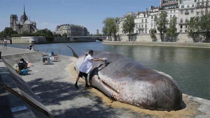 """París: una """"ballena"""" varada detrás de la catedral de Notre Dame: Un colectivo de artistas instaló una escultura de tamaño real para crear…"""