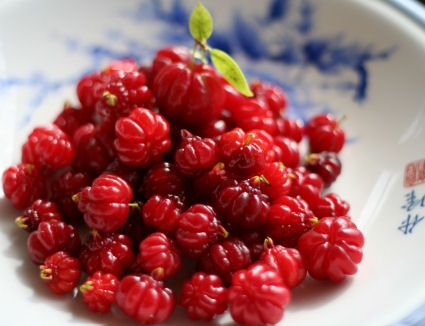 Surinam cherries grow in every hedgerow, delicious for breakfast with homemade yoghurt.