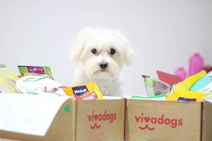 ¡Hola perronautas! Hemos recibido en casa la caja de suscripción Vivadogs del mes de julio y aprovechando que Tinto estaba de paseo cuando llegó el cartero, Pepa y yo nos pusimos patas a la caja para hacer un unboxing para vosotros y enseñaros todo el contenido en vídeo. Como veis en la foto, no solo…