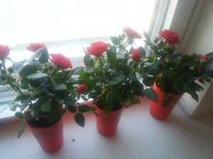 Mini Roses. A Lazy and Cheap Valentine's Day: The Faux Hotel Plan. No Bags To Check