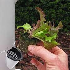 Learn more about Tower Gardens:  http://www.sanuramoon.com/what-is-a-tower-garden/