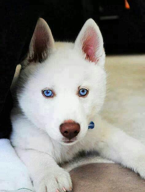 Lindo, hermoso y guapo