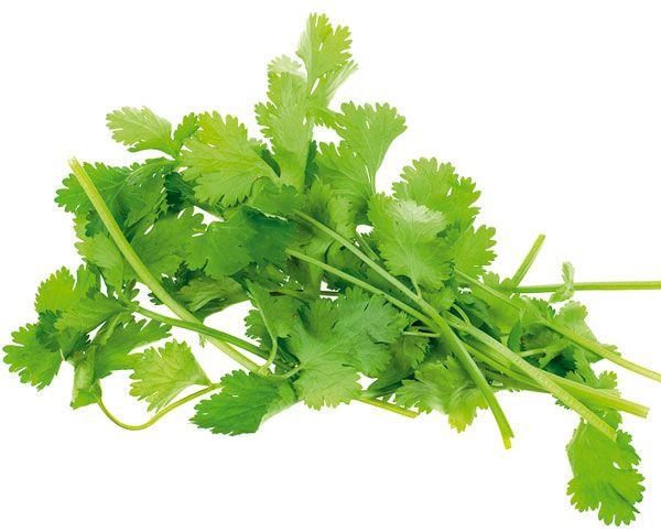Koriander siaty (Coriandrum sativum) Využitie  Listy sa nesušia, používajú sa len čerstvé. Pridávame ich do jedál až po ich tepelnej úprave. Plody tesne pred použitím rozdrvíme a trochu popražíme, aby sme zvýraznili ich chuť. Nasekané lístky možno pridať do šalátov, ostrých fazuľových polievok, majonéz či dusených pokrmov. Koriandrové semená sa používajú pri nakladaní zeleniny, ale dávajú sa aj do perníkov. V Indii sa bránia zažívacím ťažkostiam zjedením dvoch lyžíc nasekaných koriandrových…