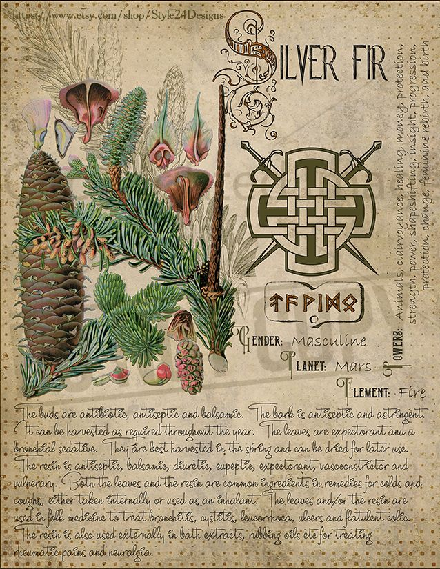 Book of Shadows page  Silver Fir  Sorry, This page is only
