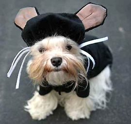 Real Dogs Don't Purr on THE PET DOCTOR on Pet Life Radio!