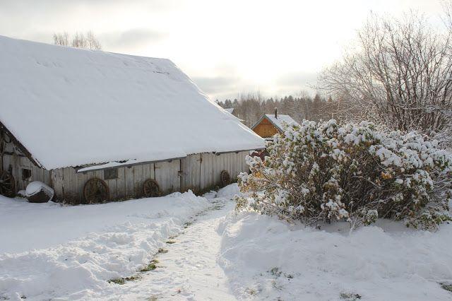 Жизнь горожанки в деревне: (-7)  Неожиданно пришла зима!
