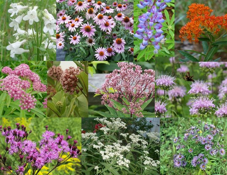 402 best native plants northeast usa images on pinterest